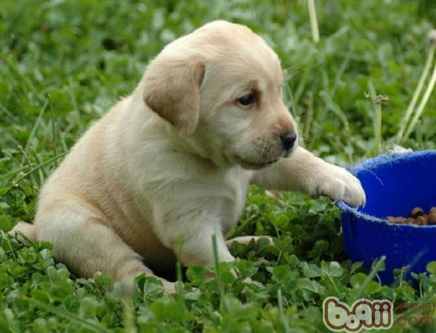 狗粮成分中脂肪的好坏鉴别-成犬饲养